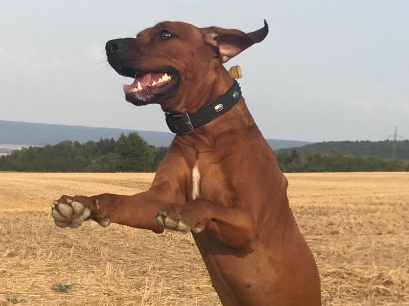 In der Ferienwohnung Teutoburger Wald hüpft auch Ihr Hund vor Begeisterung