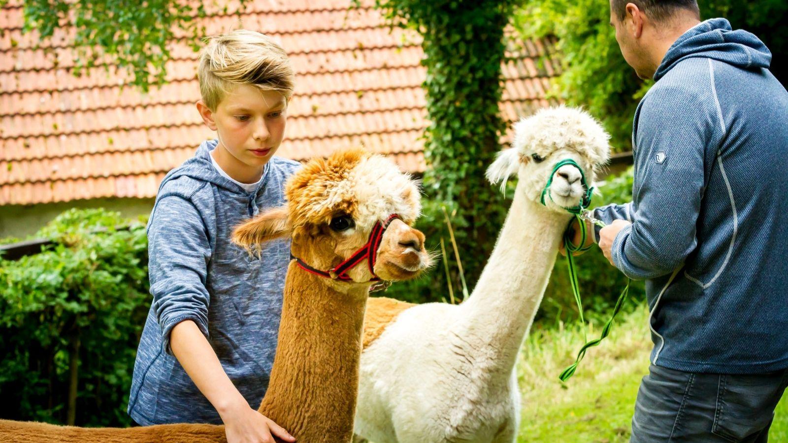 Alpaka Tour - für die ganze Familie